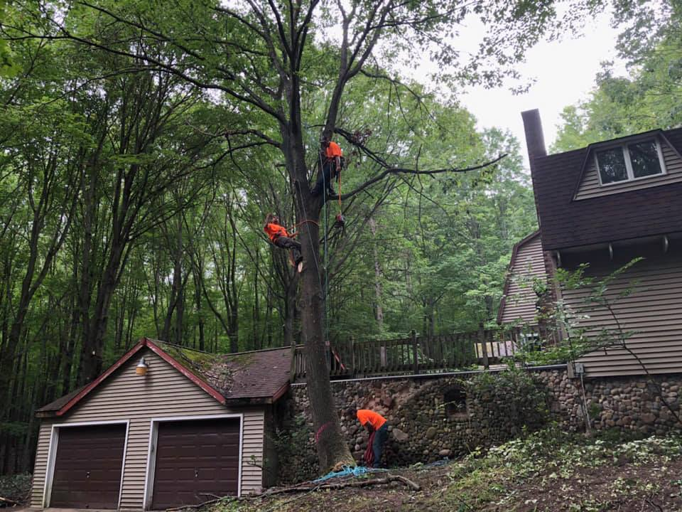 Do You Need Immediate Tree and Branch Removal Work in St. Charles & Saginaw, MI?